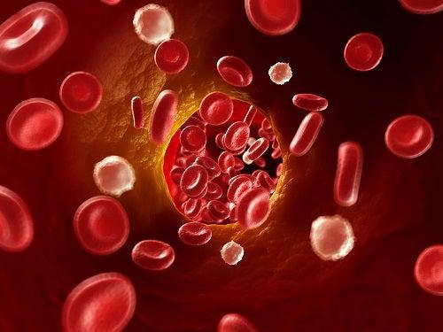 Хорошее кровообращение - залог здорового тела, оно поддерживает весь организм в тонусе