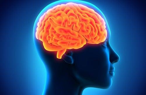 Как улучшить память с помощью народных средств?