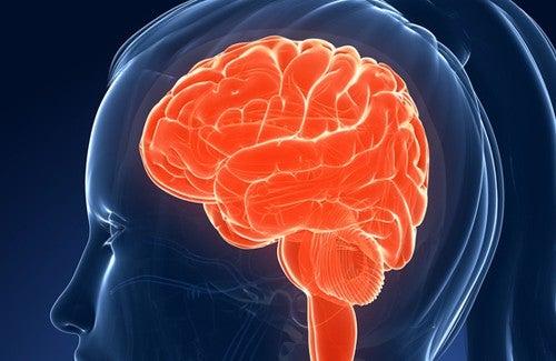 Продукты, которые негативно влияют на нашу память и интеллект