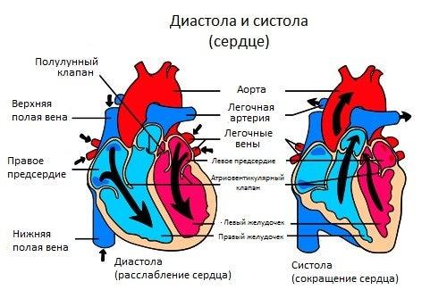 Сердечные шумы: насколько это серьезно?