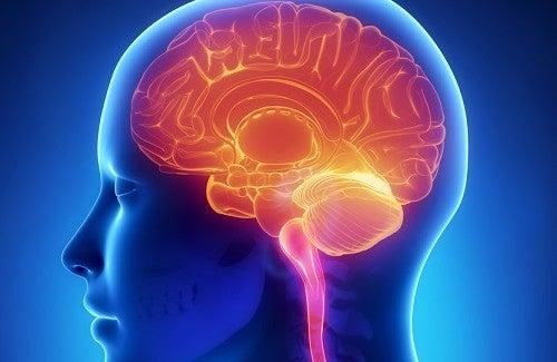Как сохранить мозг молодым и здоровым