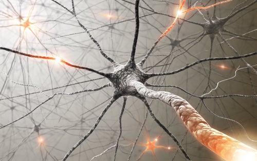 Лекарственные растения помогут укрепить память