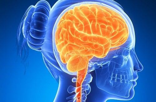 Продукты, стимулирующие работу мозга