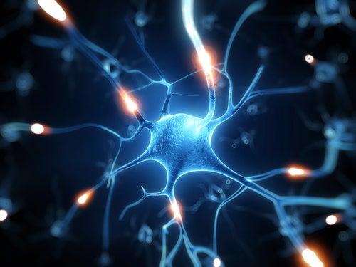 Резерватрол: природный щит для нашего мозга