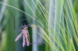 комар3
