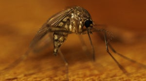 комар4