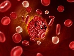 циркуляция крови и горький шоколад