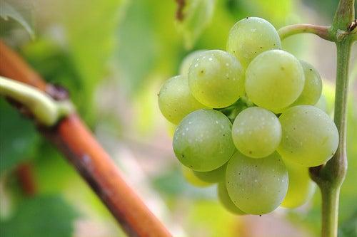 виноград может оказывать двоякое действие на уровень кислотности