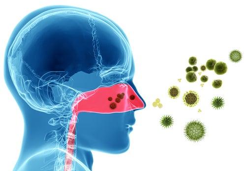 Средства для лечения аллергического воспаления слизистой носа