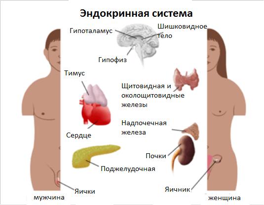 gormony