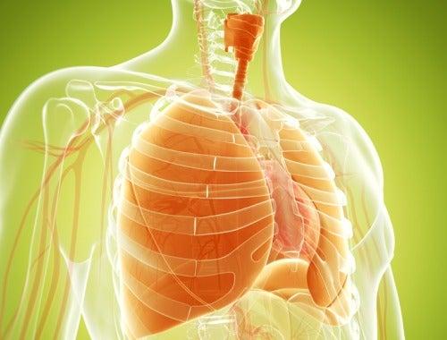Натуральные средства для очищения и укрепления легких
