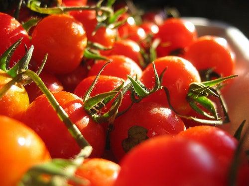 tomaty2