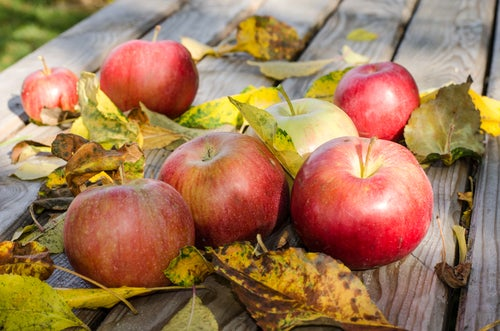 Яблоки и боль при варикозе