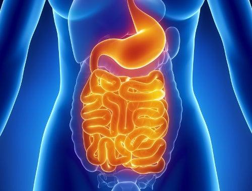 пищеварительная-система-микрофлора-кишечника