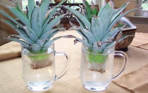 ананас-в-воде