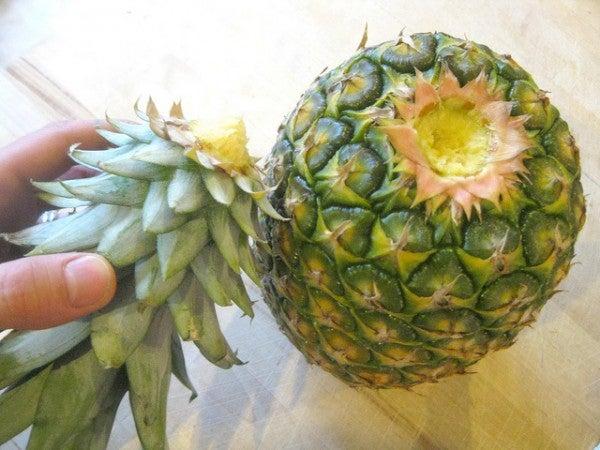 как-вырастить-ананас