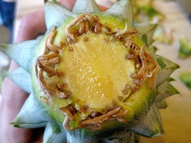 вырастить-ананас