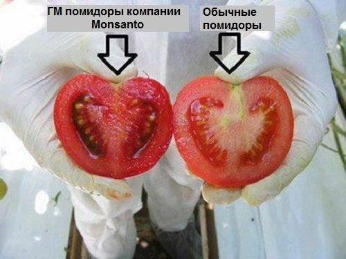 Чем опасны генномодифицированные продукты?