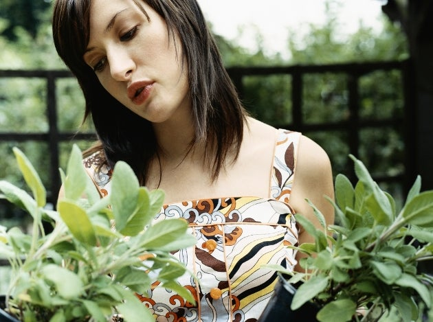 шалфей и другие Лекарственные растения
