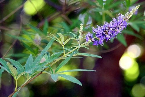 Авраамово дерево и задержка менструации