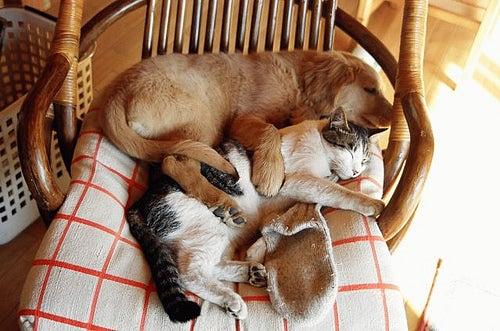 кот-собака