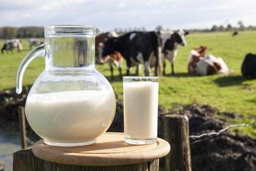 молоко и болевые ощущения в суставах