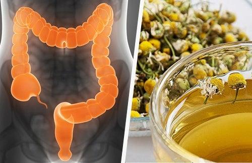6 лекарственных трав, которые помогут очистить ваш кишечник