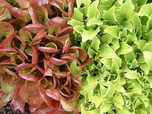 Вылечить эндометриоз поможет зеленый салат
