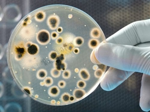 слезы и бактерии