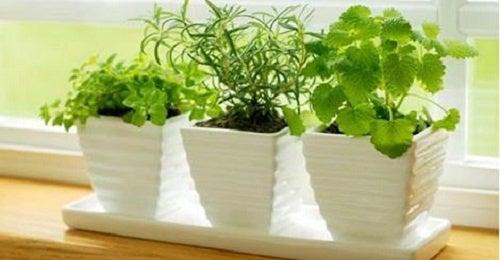 10 растений с положительной энергетикой!
