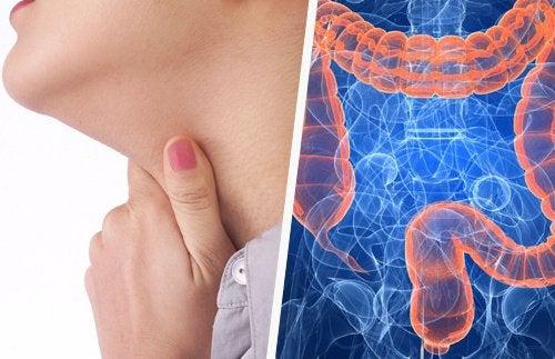 Заболевания горла и кишечник: какая между ними связь?