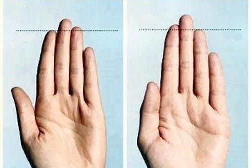 Пальцы рук и пенис