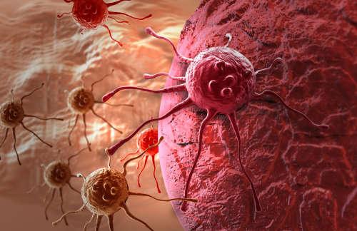 Рак боится свойств имбиря