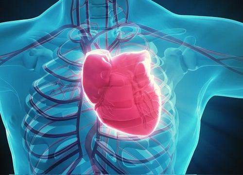 Сердце и закупорка коронарных артерий