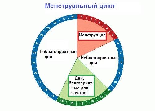 Менструация и цикл