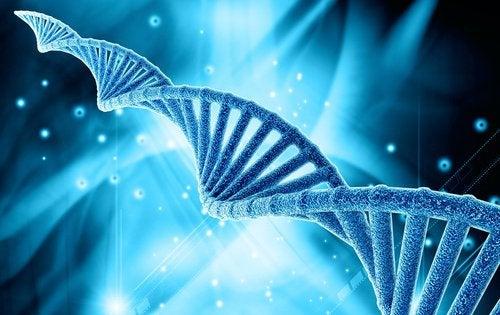 Генетика может влиять на отложения жира на животе