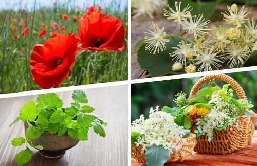 Лекарственные растения при ишиасе
