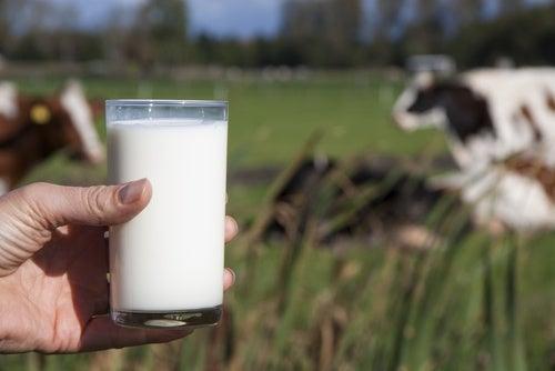 Почему людям не стоит пить коровье молоко?