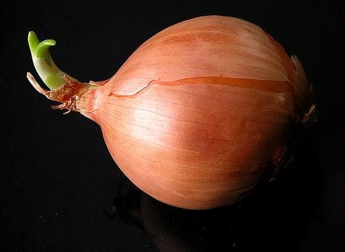 Выращивать лук дома