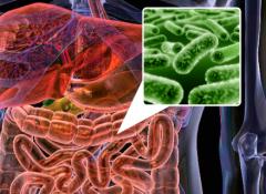 Микрофлора кишечника и пробиотки