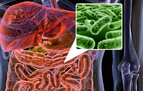 Пробиотики: 5 продуктов для восстановления микрофлоры кишечника