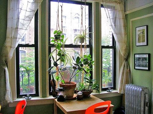 Чайные пакетики для растений