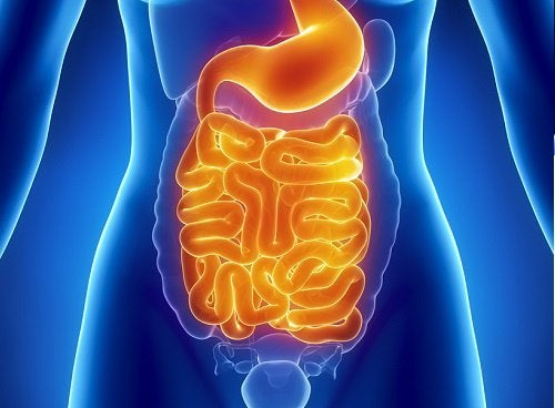 Как очистить кишечник от токсинов за 1 неделю?