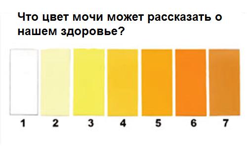 Цвет мочи темно желтый