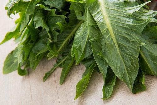 Растения для похудения: цикорий