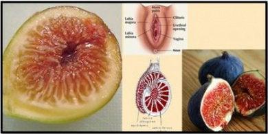 Инжир и половые органы