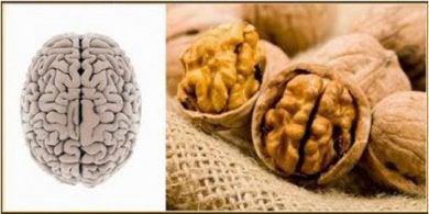 Орехи и мозг