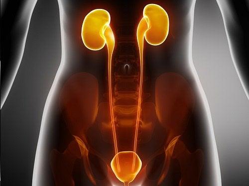 Как успокоить симптомы инфекции мочевого пузыря, уретры и почек?