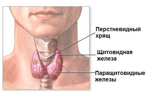 Эти натуральные средства укрепят здоровье щитовидной железы!