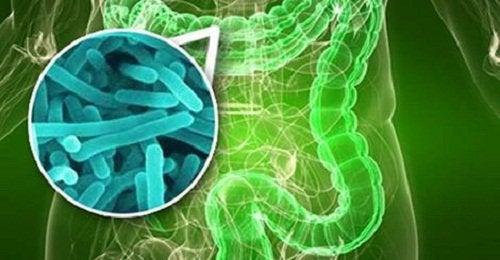 Боли в суставах и бактерии в кишечнике